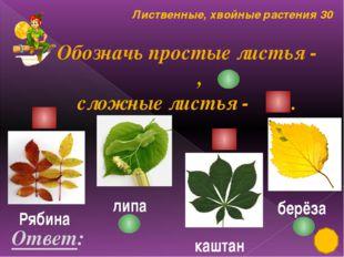 Культурные растения 20 Вставь пропущенные слова в пословицах? Ответ: 1. Хлеб