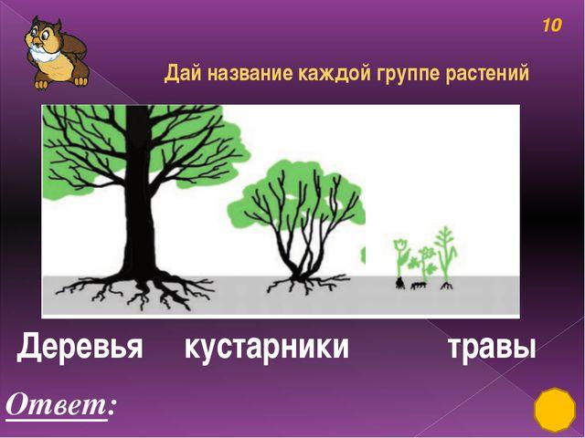 Деревья, кустарники, травы 50 Ответ: лимон Разгадай ребус, узнай название дер...