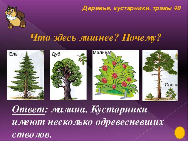Лиственные, хвойные растения 30 Обозначь простые листья - , сложные листья -...