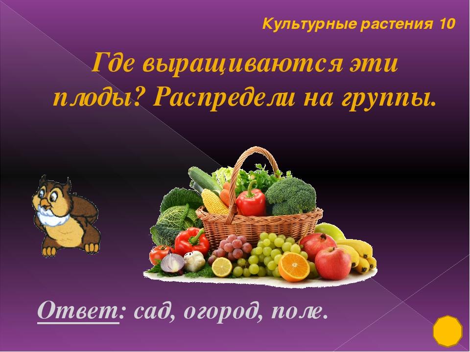 Культурные растения 50 В честь этой полевой культуры назван самолёт АН 2 Отве...