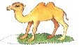 C:\мини центр\КАРТИНКИ\Домашние животные\Верблюд.jpg