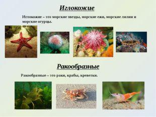 Иглокожие Иглокожие – это морские звезды, морские ежи, морские лилии и морски