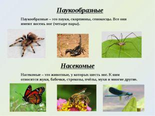 Паукообразные Паукообразные – это пауки, скорпионы, сенокосцы. Все они имеют