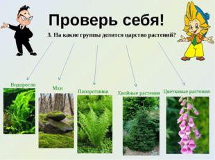 Проверь себя! 3. На какие группы делится царство растений? Водоросли Мхи Папо