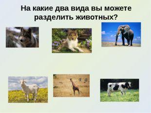 На какие два вида вы можете разделить животных?