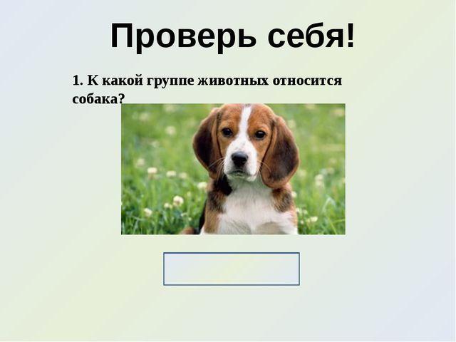 Проверь себя! 1. К какой группе животных относится собака? Домашние животные