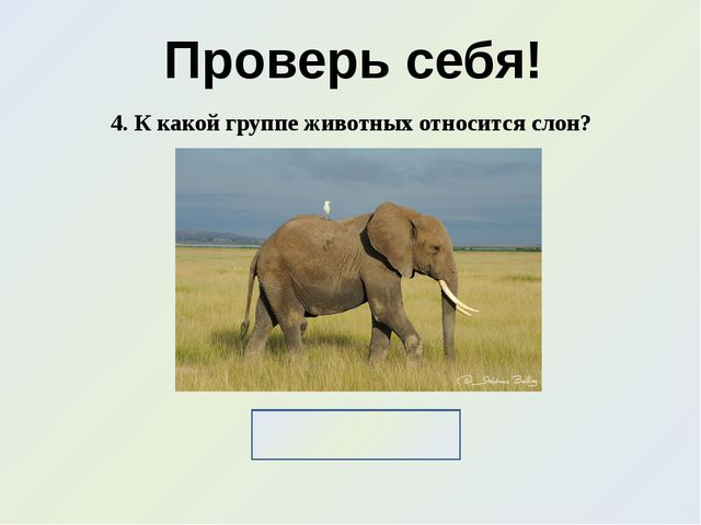 Проверь себя! 4. К какой группе животных относится слон? Млекопитающие