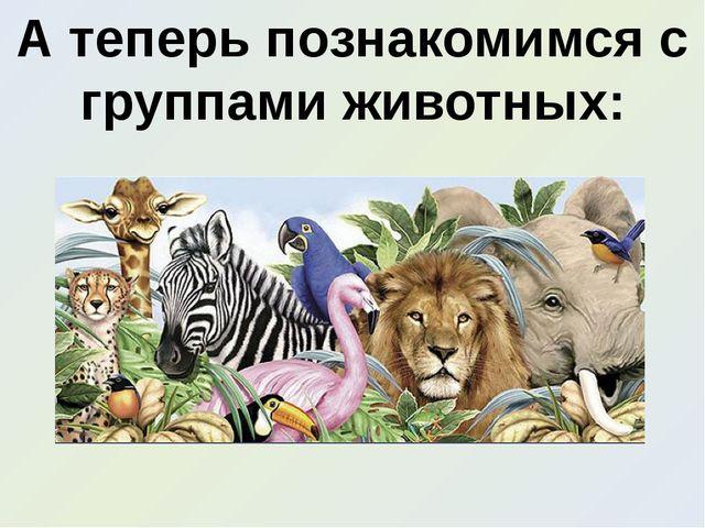 А теперь познакомимся с группами животных: