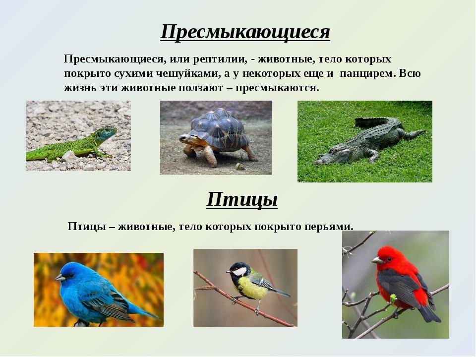 Пресмыкающиеся Пресмыкающиеся, или рептилии, - животные, тело которых покрыто...