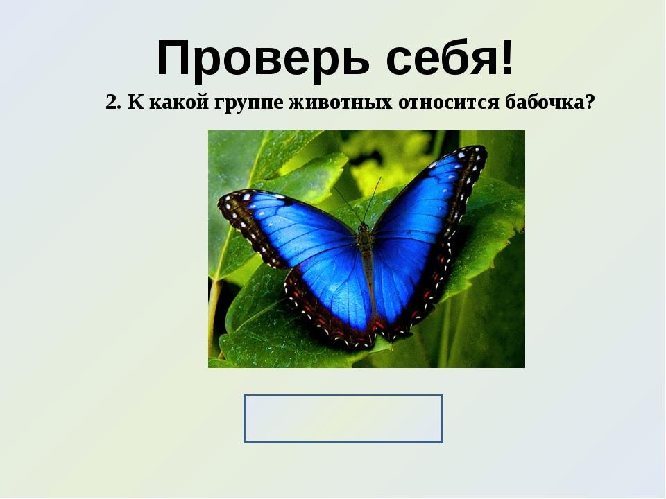 Проверь себя! 2. К какой группе животных относится бабочка? Насекомые