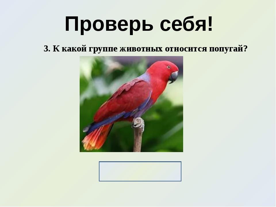 Проверь себя! 3. К какой группе животных относится попугай? Птицы