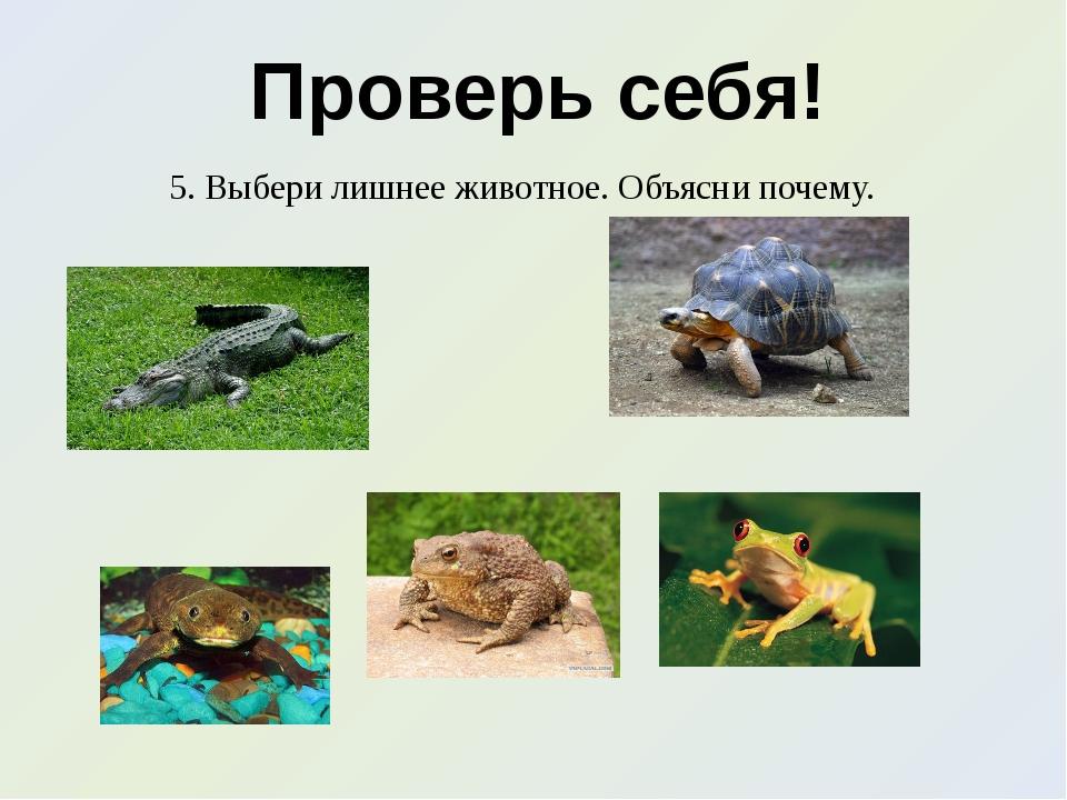 Проверь себя! 5. Выбери лишнее животное. Объясни почему.