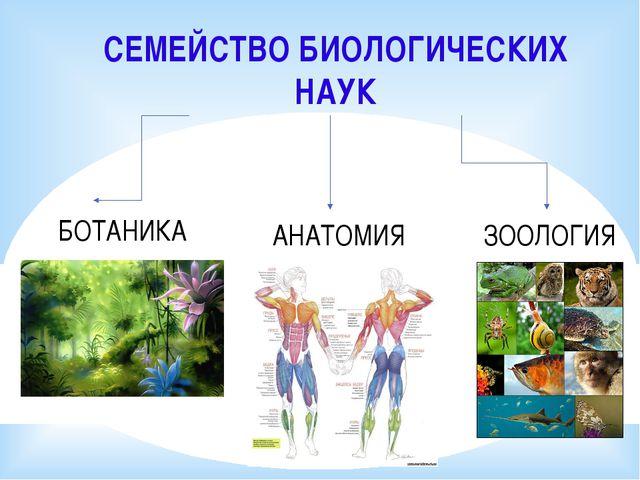 СЕМЕЙСТВО БИОЛОГИЧЕСКИХ НАУК БОТАНИКА ЗООЛОГИЯ АНАТОМИЯ