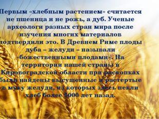 Первым «хлебным растением» считается не пшеница и не рожь, а дуб. Ученые арх
