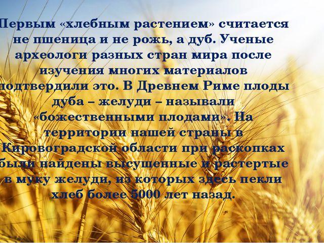 Первым «хлебным растением» считается не пшеница и не рожь, а дуб. Ученые арх...
