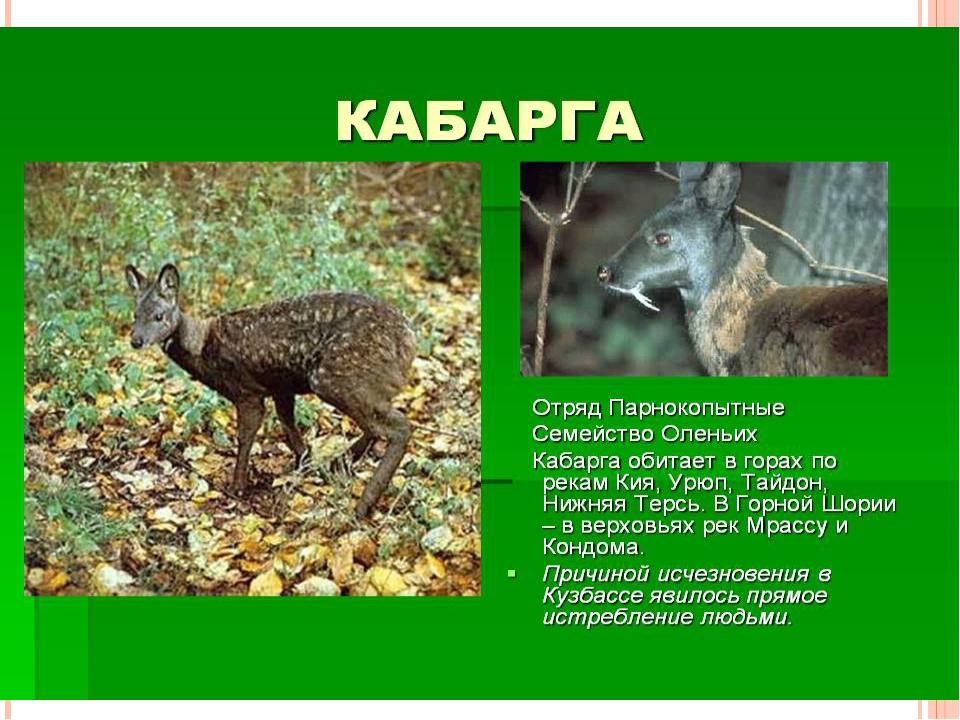 Животные и растения нуждающиеся в охране на территории Кемеровской области