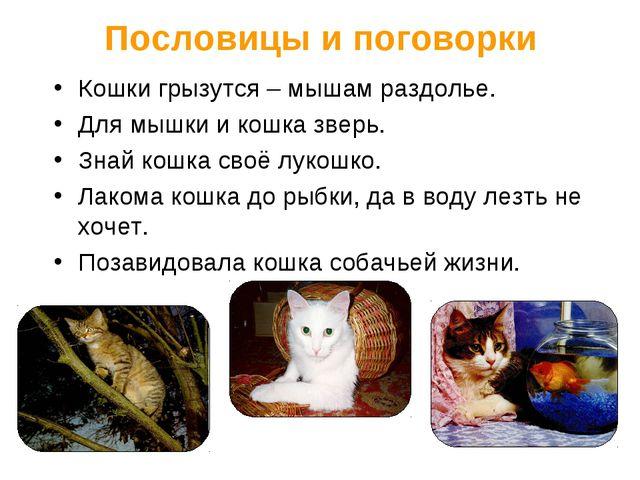 Пословицы и поговорки Кошки грызутся – мышам раздолье. Для мышки и кошка звер...