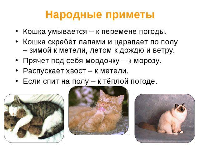 Народные приметы Кошка умывается – к перемене погоды. Кошка скребёт лапами и...