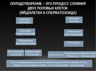 ОПЛОДОТВОРЕНИЕ – ЭТО ПРОЦЕСС СЛИЯНИЯ ДВУХ ПОЛОВЫХ КЛЕТОК (ЯЙЦЕКЛЕТКИ И СПЕРМА