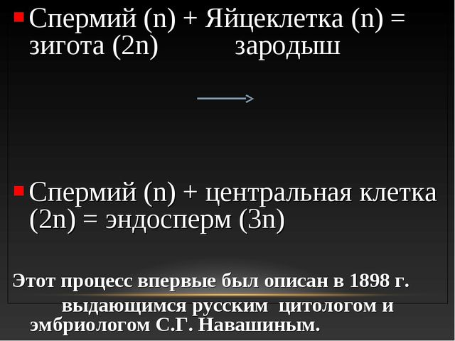 Спермий (n) + Яйцеклетка (n) = зигота (2n) зародыш Спермий (n) + центральная...