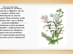 Тысячелистник В его цветках и листьях содержатся эфирные масла, которые губит