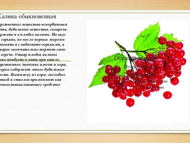 Калина обыкновенная Лекарственные вещества-аскорбиновая кислота, дубильные ве...