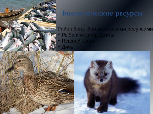 Биологические ресурсы Район богат биологическими ресурсами: Рыба и морепродук...