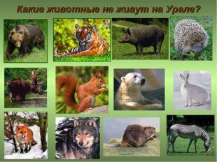Какие животные не живут на Урале?