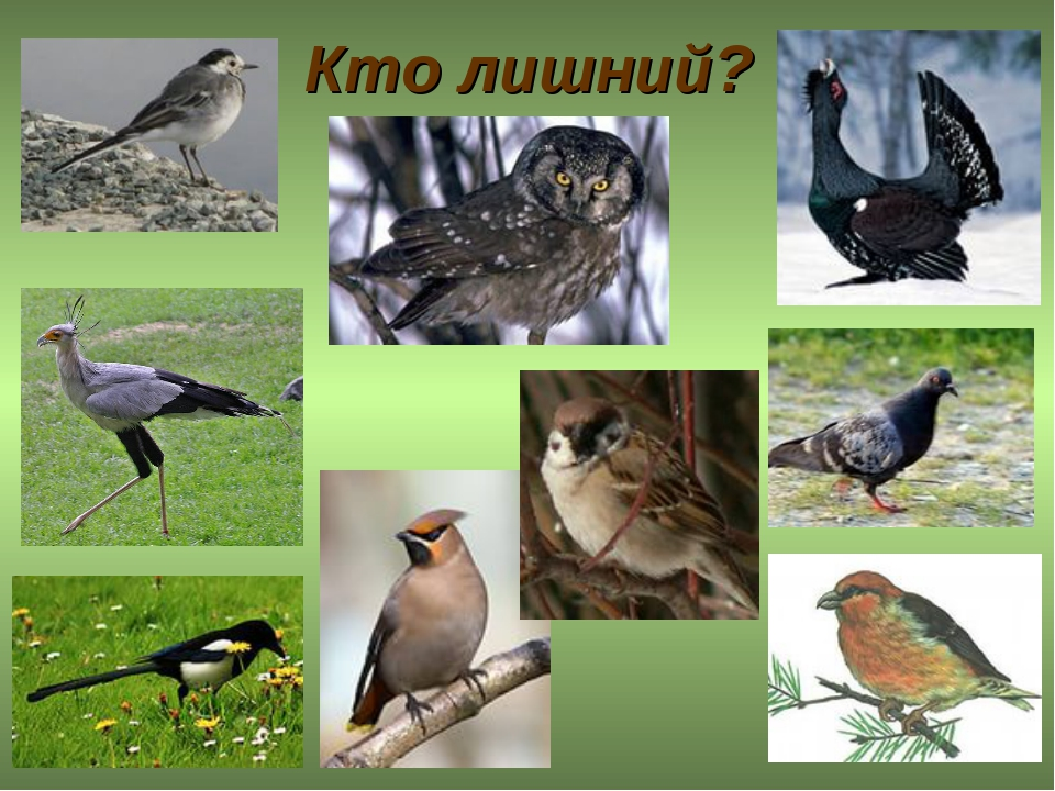 Перелетные птицы челябинской области фото и название