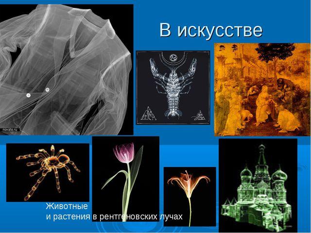 В искусстве Животные и растения в рентгеновских лучах