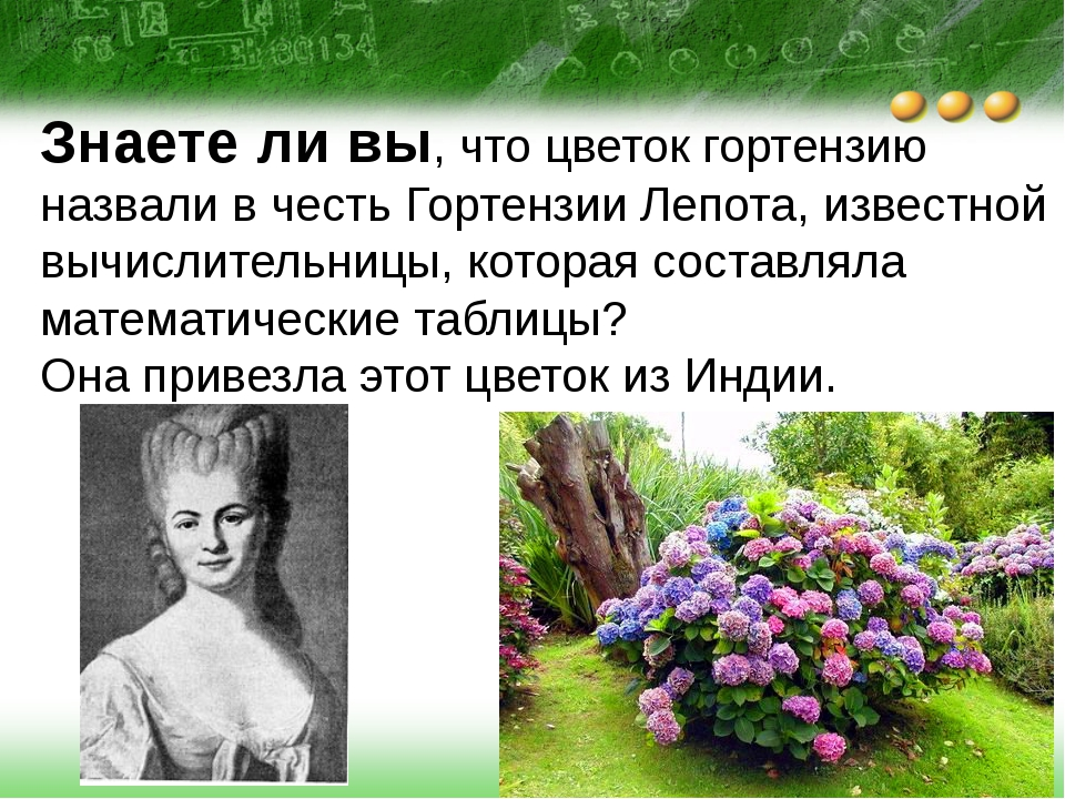 Знаете ли вы, что цветок гортензию назвали в честь Гортензии Лепота, известно...