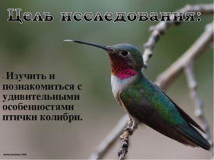- Изучить и познакомиться с удивительными особенностями птички колибри.