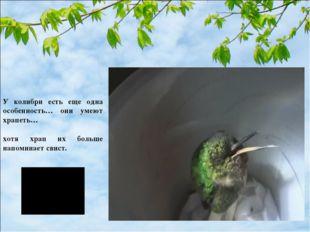 У колибри есть еще одна особенность… они умеют храпеть… хотя храп их больше н