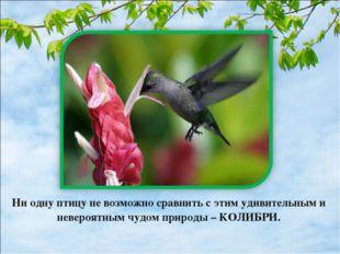 Ни одну птицу не возможно сравнить с этим удивительным и невероятным чудом пр