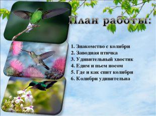 1. Знакомство с колибри 2. Заводная птичка 3. Удивительный хвостик 4. Едим и
