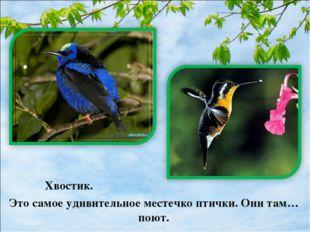 Хвостик. Это самое удивительное местечко птички. Они там… поют.