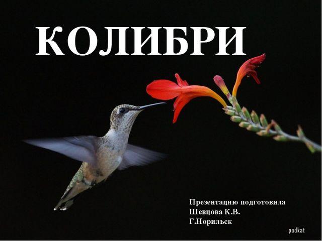 КОЛИБРИ Презентацию подготовила Шевцова К.В. Г.Норильск