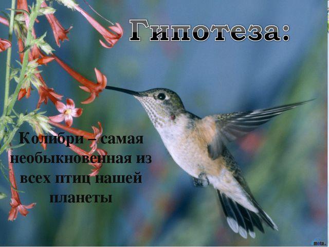 Колибри – самая необыкновенная из всех птиц нашей планеты