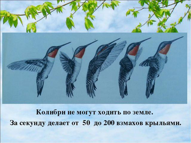 Колибри не могут ходить по земле. За секунду делает от 50 до 200 взмахов крыл...