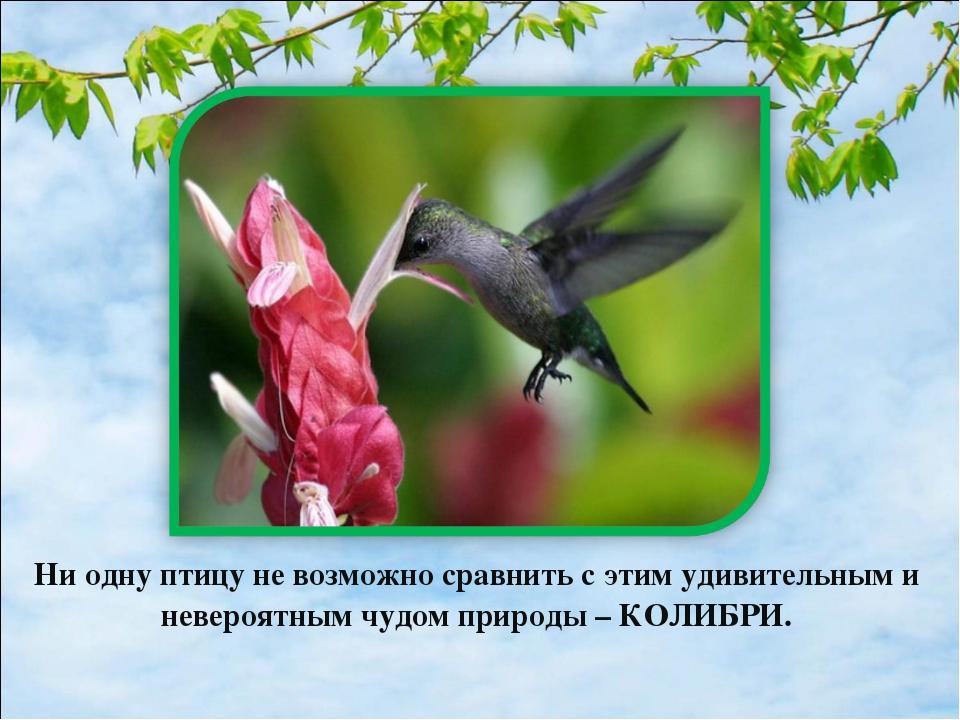 Ни одну птицу не возможно сравнить с этим удивительным и невероятным чудом пр...