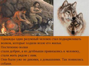 Однажды один разумный человек стал подкармливать волков, которые ходили возле