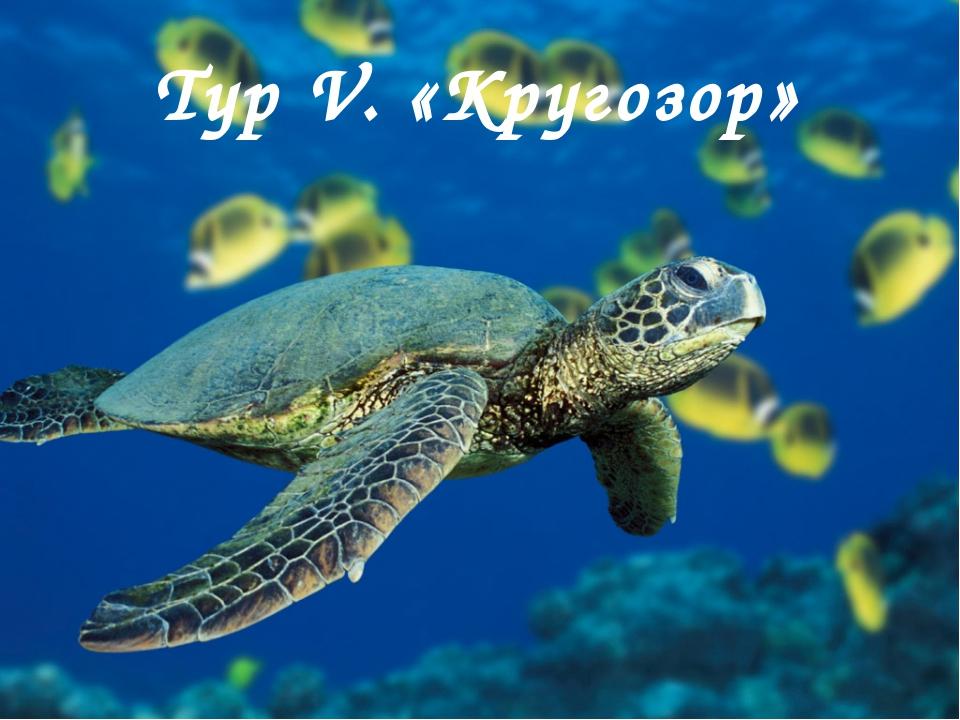 Тур V. «Кругозор»