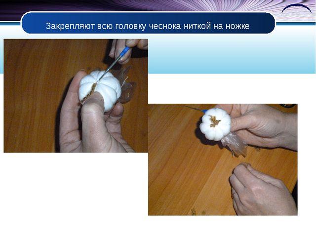 Закрепляют всю головку чеснока ниткой на ножке