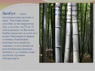 Бамбук — самое быстрорастущее растение в мире. Некоторые виды способны за ча
