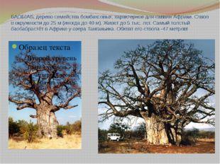 БАОБ˜АБ, дерево семейства бомбаксовых, характерное для саванн Африки. Ствол в
