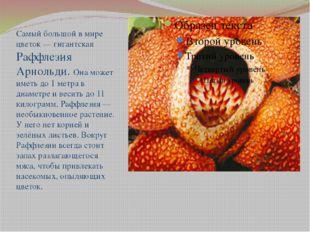 Самый большой в мире цветок — гигантская Раффлезия Арнольди. Она может иметь