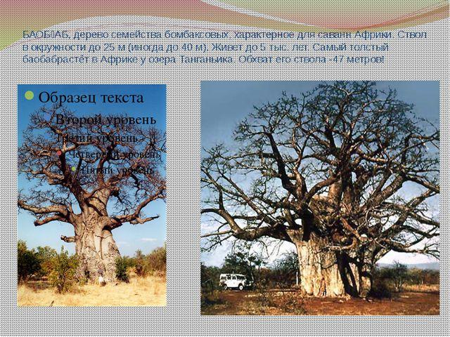 БАОБ˜АБ, дерево семейства бомбаксовых, характерное для саванн Африки. Ствол в...