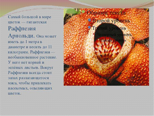Самый большой в мире цветок — гигантская Раффлезия Арнольди. Она может иметь...