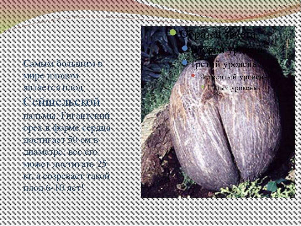 Самым большим в мире плодом является плод Сейшельской пальмы. Гигантский оре...