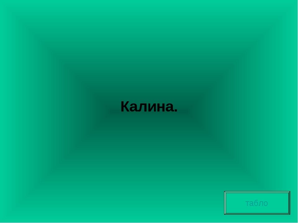 Калина. табло